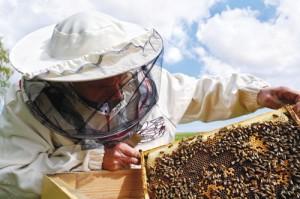 apiculteur-pro