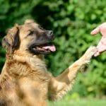 Comment trouver plus facilement un garde chien ?