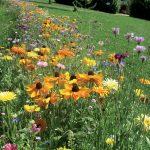 Où trouver le meilleur gazon synthétique pour votre jardin?