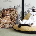 Que faut-il savoir sur les chats de race ?