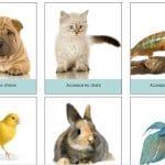 Où acquérir les meilleurs chats et chiens de race ?