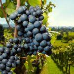 Conseils pour acheter un domaine viticole dans le Languedoc