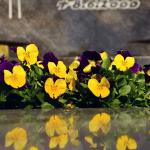 Comment trouver une pierre tombale originale ?