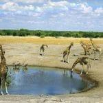 Quelles activités touristiques pratiquer durant un circuit en Namibie ?