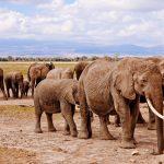 Explorer le village de Serowe le temps de Botswana prestiges voyages