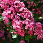 Une touche de couleur pour votre jardin fleuri : le décorosier