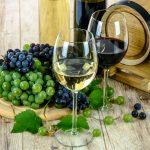 Où trouver les meilleurs vins à Fitou?